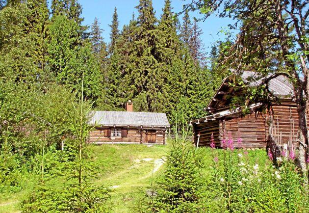 En fäbod får inte ligga närmare än 1 000 meter från hemgården. Det slår Länsstyrelsen i Västerbotten fast.