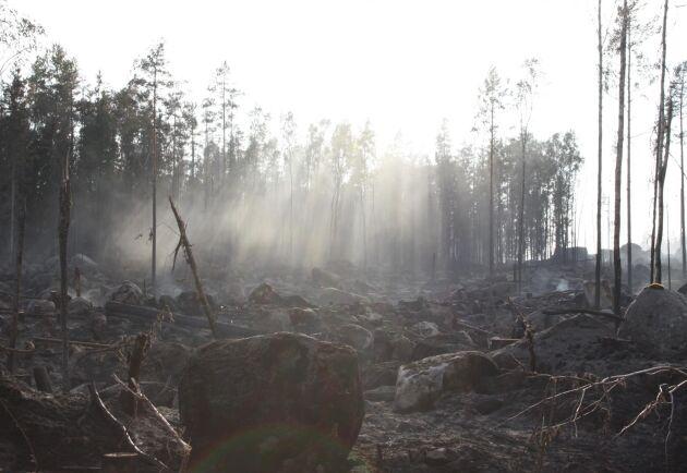 En av flera skogsbränder som bröt ut i sommar.