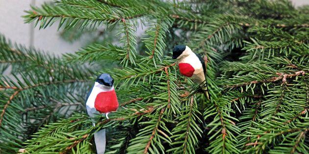 Tälj julens gulligaste småfåglar till granen