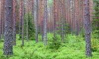 Rättssäkerheten urvattnas för skogsägare