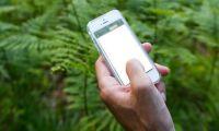 Lättare att rapportera skada från skogen