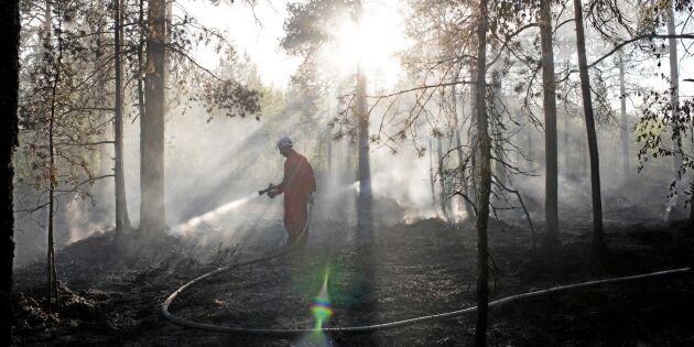 Efter skogsbränderna: Försäkring dubbelt så dyr
