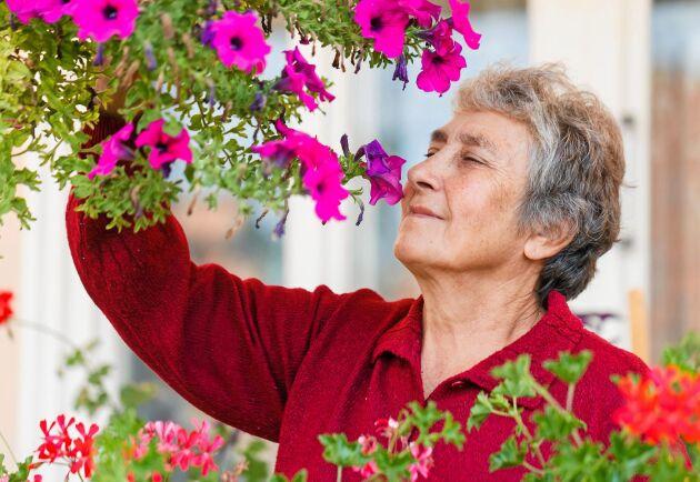 Blommor gör stor skillnad, särskilt för äldre, ledsna och ensamma.