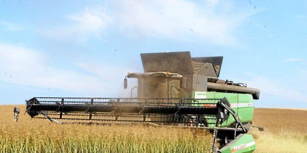 Högtryck på skånska mottagningar för spannmål