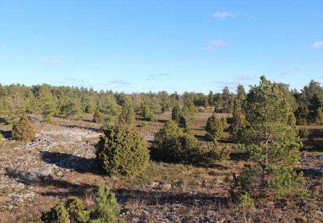 Det finns både gammal skog och mycket yngre gallringsskog på gårdens mark.