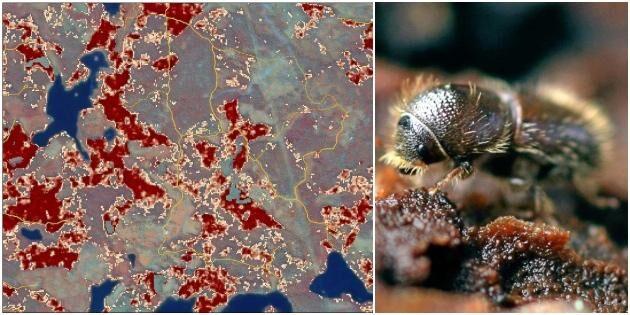 Ny karta visar om din skog är i riskzonen