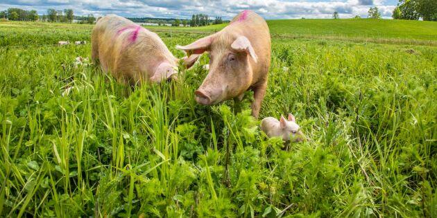175 miljoner till lantbrukare som ställer om till eko