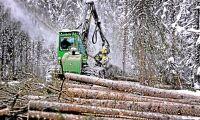 Vi vill göra skogen till en jämställd arbetsplats