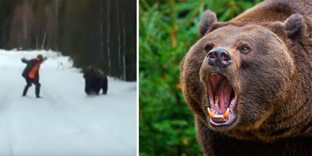 """""""Spela död är skitsnack!"""" Så gör du om björnen går till attack!"""