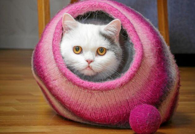 Katter älskar små varma bon. Sticka och tova ett i present.