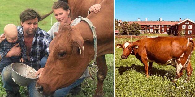 Deras gårdsmejeri kan slås ut av ny chockavgift!