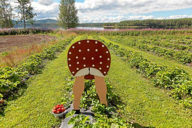 Den roliga skylten inbjuder till självplock i den 3,5 hektar stora jordgubbsodlingen nära sjön.