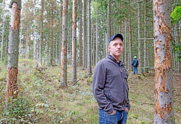 Blekinge är hårt drabbat av granbarkborrens härjningar. Anton Ivarsson visar upp skadade träd.