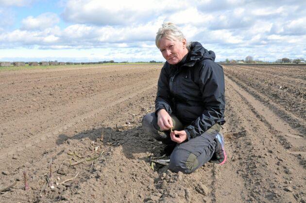 Förra frostnatten förlorade grönsaksodlaren Mia Jonsson 300 000-500 000 kronor. Efter ännu en oförutsedd frostnatt är läget tufft. Hon efterlyser nu ett krisstöd för grönsaksodlare.