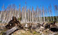 Torka hotar tyska skogar