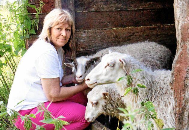 Gunilla Larsholt kan ull. På Hallagården har hon får, alpacka, angoragetter och angorakaniner.