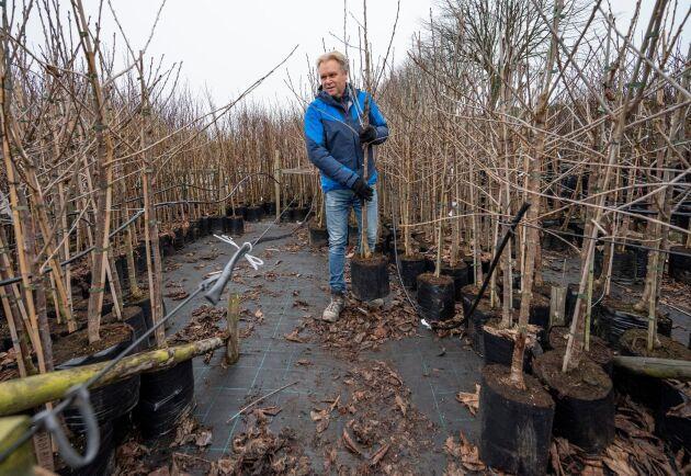 Jan-Peter Johansson, vd på Plantskolan i Ängelholm, bland fruktträd som är redo för leverans.