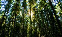 Skogsaffär i mångmiljonklassen