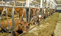 Kraftfoder kan lindra foderbristen