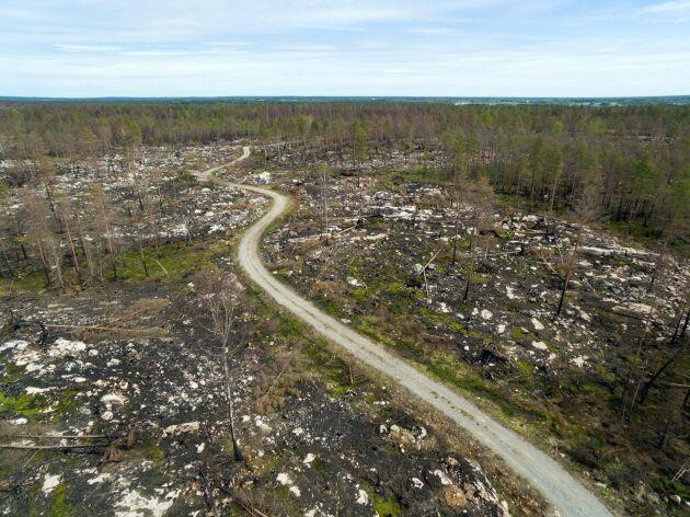 Arkivbild. Från skogsbranden i Västmanland 2014.