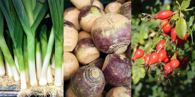 Mat i säsong: 7 svenska råvaror du ska äta i november