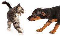 Länsstyrelsen utsatt vid djurinsatser