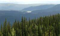Upprop för fjällnära skog