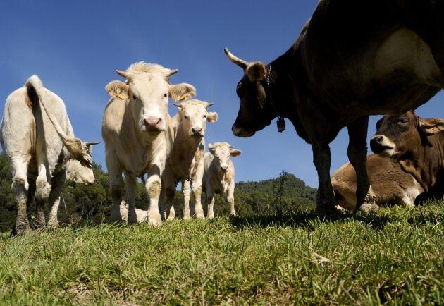 Ett stödpaket på en miljard euro kommer att skapas för att hjälpa drabbade lantbrukare – om avtalet leder till allvarliga marknadsstörningar. Arkivbild.