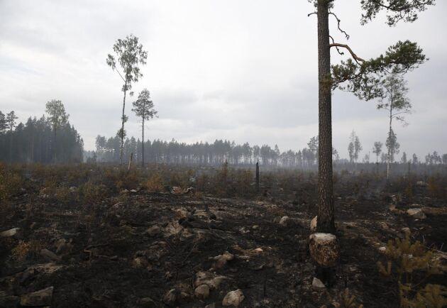 Skogsbranden i Västmanland bröt ut den 31 juli 2014.