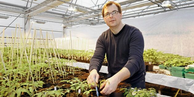 Grönsaksodling bromsas av nya ekoförordningen