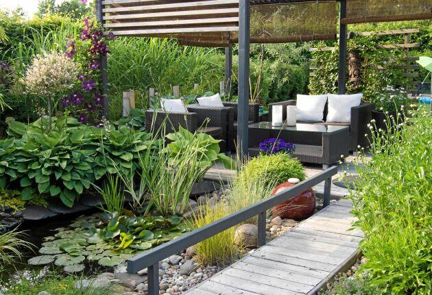 En rak, svartlaserad pergola ger växterna omkring huvudrollen.