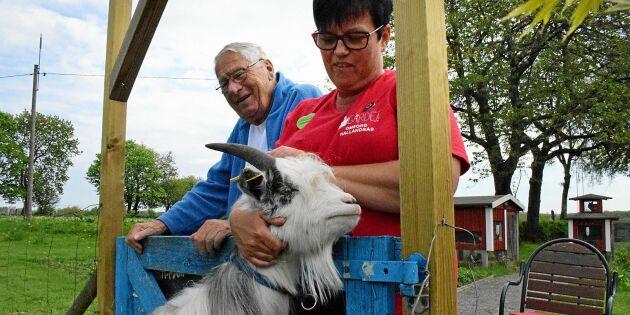 """Unik gård för demenssjuka: """"Djur och natur är bra för människor"""""""