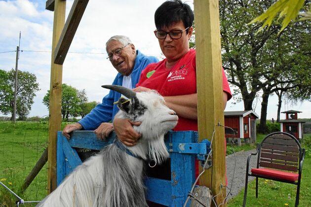 Sven Hultström och Camilla Johnsson har lärt sig att hantera den lite bångstyriga geten Sune.
