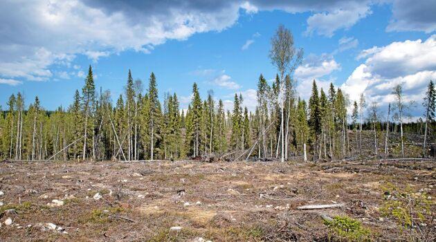 Ett mycket stort hygge med få naturhänsyn imponerar inte, trädridån i mitten ska väl dölja storleken men här ser vi inte ett modernt kalhygge.