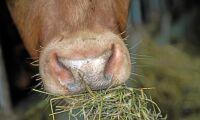 Sekundmätning ska ge bättre kontroll på grovfoder