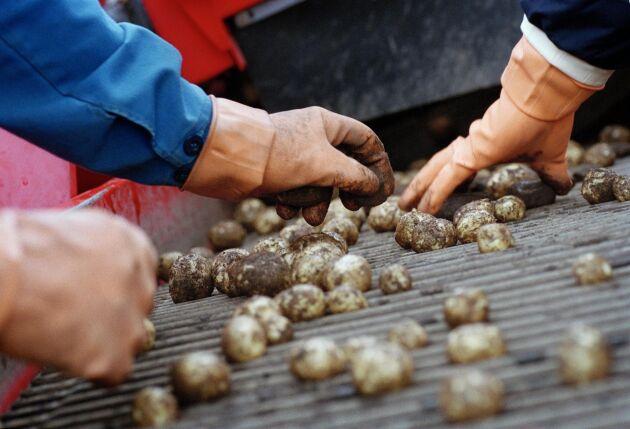 Eskilstuna kommun har beslutat att en lantbrukare i kommunen inte får använda växtskyddsmedel på sin potatisodling. Ett beslut som innebär att han har rätt till ersättning från kommunen, enligt Mark- och miljööverdomstolen.