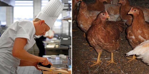 För första gången: Svensk kyckling råvara i Årets kock