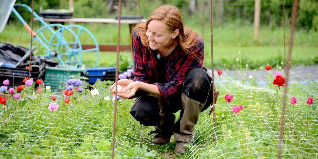 Säsongen för klimatsmarta blommor är här