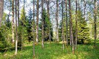 Långt kvar till skogsprogrammet
