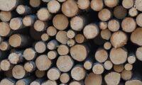 Hot om skogstrejk i Finland