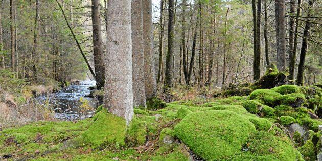 Svenskar vill rädda naturen (i alla fall de flesta!)