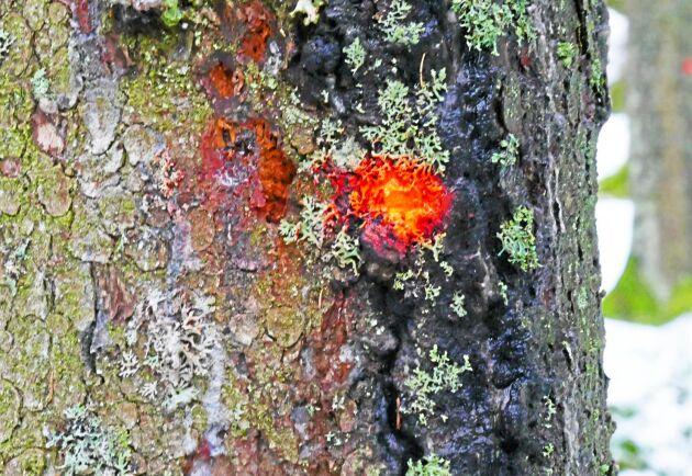 Offerter på en tjänst som rotpoststämpling kan tas in via nya tjänsten Skogsvårdstorget.