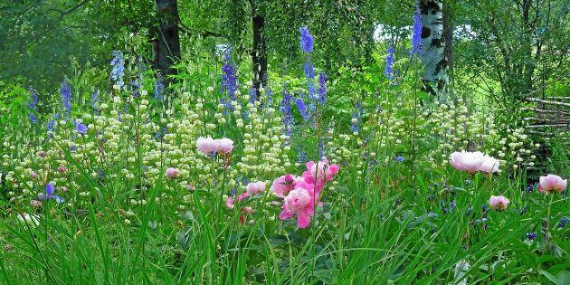 Älskade trädgård – vinn genom att visa och berätta