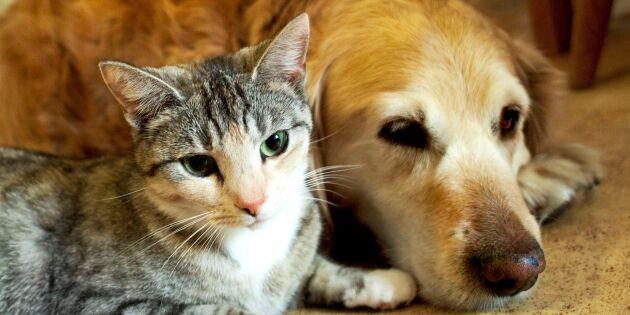 """Debatt: """"Dags att se över antibiotikaanvändningen för sällskapsdjur"""""""