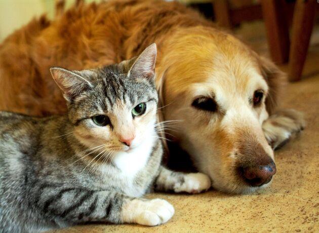 Trots ett pågående arbete finns det mycket kvar att göra när det gäller förskrivning av antibiotika till våra sällskapsdjur