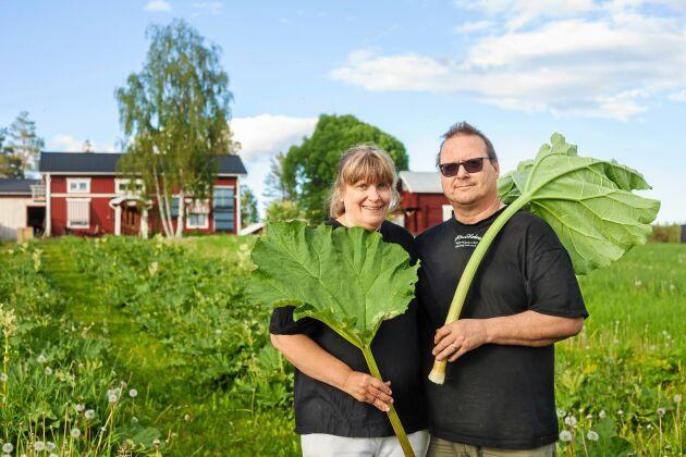 Par i rabarber, Tord och Maria Nilsson driver norra Sveriges största rabarberodling, 2,5 mil från Piteå.