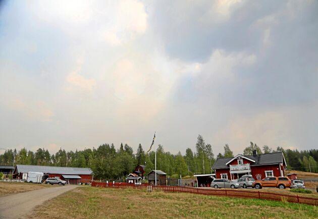 På gården finns flera kor som vanligtvis betar i skogen.