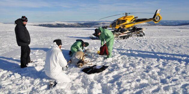 Nytt fall av CWD i Norge