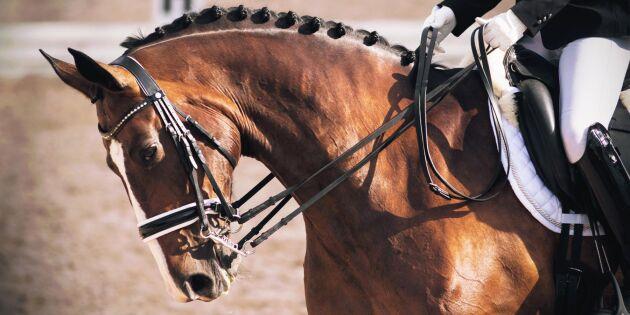 Inställda hästtävlingar har satt fart på aveln