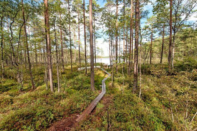 Vackra omgivningar till Kolarbyn i Västmanland, där gästerna bor i vedeldade kolarkojor.